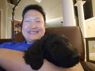 Jimmy puppy