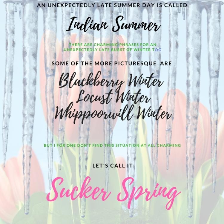 sucker spring