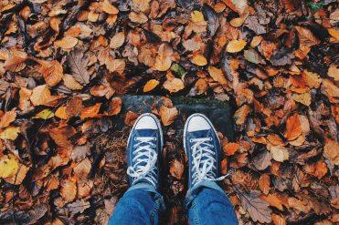 autumn-close-up-color-267313